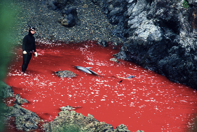 Sign the new petition to Japanese Prime Minister Abe to stop the Taiji slaughter